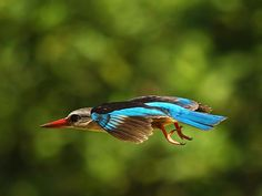 It shows photo galleries by reknown photographers and gives bird names in Latin, English, Afrikaans and German. Exotic Birds, Colorful Birds, South African Birds, Backyard Birds, Vertebrates, Show Photos, Kingfisher, Blue Jay, Awesome Things