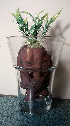 DIY Mandrake -- Harr