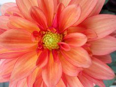 pink orange purple flowers - Google Search
