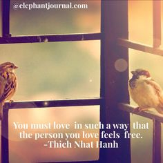 """""""You must love in such a way that the person you love feels free."""" ~ Thich Nhat Hanh.  Read https://www.elephantjournal.com/2016/11/thich-nhat-hanhs-call-to-action-to-heal-the-world/ @elephantjournal.com #mayitbeofbenefit #thichnhathanh #quotes @waylonlewis"""