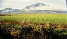 4.6.2015.Chiricahua Mts, near Portal, AZ, mar 1995.