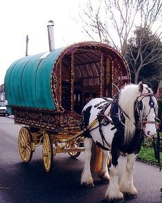 Gypsy horse doing what they were bred to do!!
