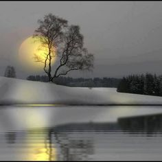 Everything | Midnight Sun