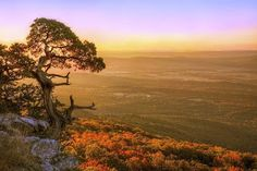 Cedar Tree  A small cedar tree clings to life on this Mt. Magazine overlook in Arkansas while the rising sun bathes the autumn colors below in warm light. Photo by +Jason Politte   Posted by BransonVacationRentalCabins.com  #cedartree