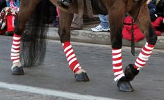 These pictures were taken during the Parker Christmas Carriage Parade and they highlight some of the many ways a horse can be made to look Christmas-y.