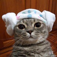 From @nugget_pancake: Bath time Pancake - Korean style  양머리   #catsofinstagram [source: http://ift.tt/1j5FJqX ]