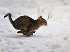 Hover kitty!