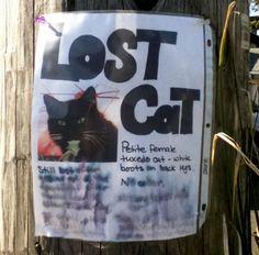 More Kitties Have Gone Missing!   The Blog of Otis http://cultofotis.wordpress.com/