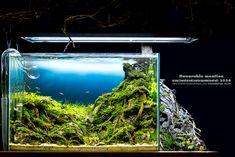 งานวันปลาสวยงามแห่งชาติ 2558 เพิ่มรูปหน้าตรง