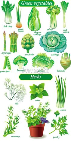 Exquisite green vegetables vector