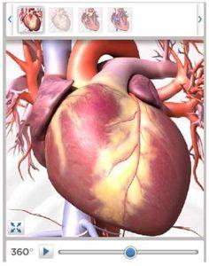 Free Educational Resource: Anatomy Videos