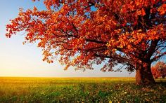 autumn ,tree,fields wallpaper