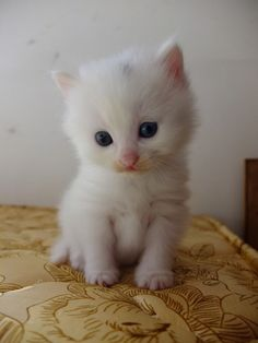 So sweet 😍 Kittens Cutest Baby, Cute Baby Cats, Kittens And Puppies, Cute Cats And Kittens, Cute Puppies, Cute Dogs, Baby Animals Super Cute, Cute Little Animals, Cute Funny Animals