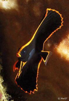Bat Fish -Sealife, 2 | Dusky's Wonders