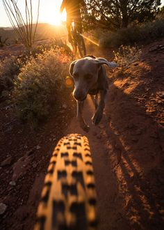 Trail Dogs anyone? What a killer shot, so nicely done! via pureclimber