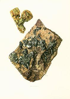 Geological Wall Art. Antique Mineralogy Print. Mineral wall art. Vintage geology art. Gift idea for geologist student. Gemstones illustrations. From Claus Caspari illustrat...