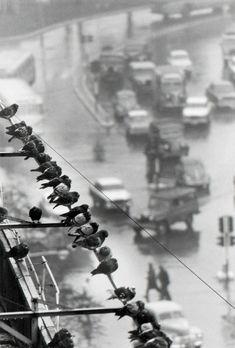 avenida grde julio, buenos aires, june 28, 1962 © andré kertész