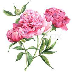 Stock image of 'Pink vintage peonies, botanical spring watercolor illustration'