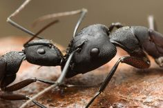 ants by ~buleria on deviantART