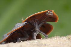 Trilobite Beetle IMG_1762 copy | Flickr - Photo Sharing!