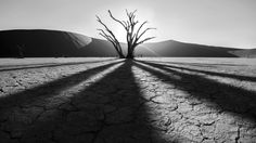 Deadvlei and Sossus Vlei in Namibia are places of stark contrast - animals survive in the most arid conditions, the dunes rise directly out of the flat salt flats, German farms dot the Namibian country, and these trees used to live in the middle of it all.