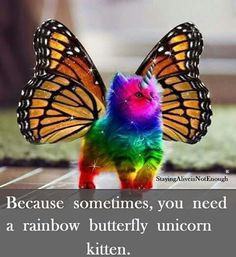 Because sometimes, you need a rainbow butterfly unicorn kitten. ... of course ;)