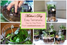 Mother's Day Terrariums from waddleeahchaa.com