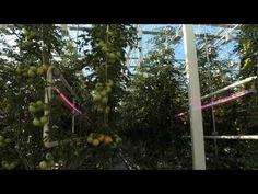 Tekemällä oppii! - Hämeen ammattikorkeakoulu -video Ladder, Gardening, Stairway, Lawn And Garden, Ladders, Horticulture