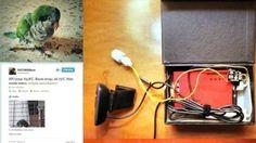 Vigilancia remota de un pájaro con Raspberry Pi - Raspberry Pi