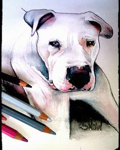 #Dogo#Dogueargentin#Dessin