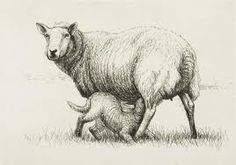Henry Moore ~ sheep