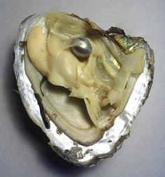 s. krupinska  black pearl in a shell november 2012.