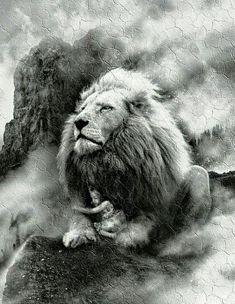 Lion King Art, Lion Of Judah, Lion Art, Lion Photography, The Lion Sleeps Tonight, Pictures Of Jesus Christ, Lion Love, Lion Wallpaper, Lion Pictures