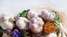 Přírodní antibiotika, která mohou pomoci vpočátku nemoci Garlic, Vegetables, Food, Essen, Vegetable Recipes, Meals, Yemek, Veggies, Eten