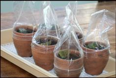 How to propogate African violets. Propogation is the way to make new plants.
