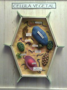 examples of plant cell projects / how to make a model of a plant cell with paper / animal cell model in a shoebox / animal cell model shoebox / how to make a plant cell model out of household items / plant cell made out of a shoebox Simple Plant Cell, 3d Plant Cell, Plant Cell Model, Plant And Animal Cells, 3d Cell, Edible Cell Project, Plant Cell Project, Cell Model Project, Animal Cell Project