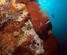 """Malpelo cúspide de  una cordillera submarina, la única isla oceánica del pacifico. Santuario de fauna y flora en 1995. """"Declarada zona especialmente sensible por la OMI Y come Patrimonio Natural de la Humanidad Por la Unesco""""  la isla es un santuario para especies en peligro de extinción. El tiburón martillo puede ser encontrado en esta isla."""