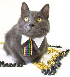 Mardi Gras kitty