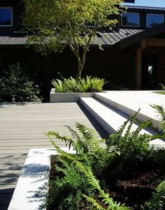 I love the steps and decking in this contemporary garden