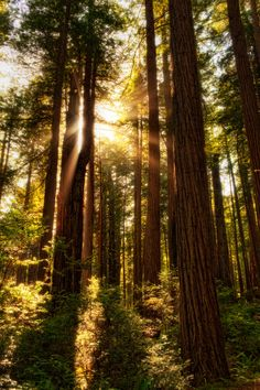 Amazing Places           - Redwoods National and State Parks - California -...
