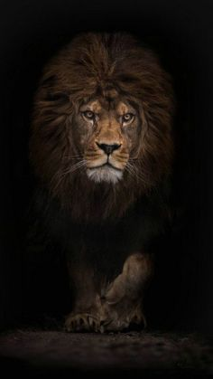 Modern home decor hd prints oil painting canvas wall art animal lion king - Tiere Beautiful Cats, Animals Beautiful, Animals And Pets, Cute Animals, Wild Animals, Lion King Animals, Baby Animals, Gato Grande, Lion Love