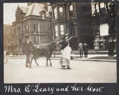 O'Leary and Her Cow; Charles R. Clark, Photograph, 1911 Did Mrs. O'Leary and her cow really start the Great Chicago Fire? Chicago River, Chicago City, Chicago Area, Chicago Illinois, American Firefighter, Chicago School, Nostalgic Images, Chicago Photos, My Kind Of Town