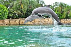 Swimming with the Dolphins at Discovery Cove in Orlando, Florida.