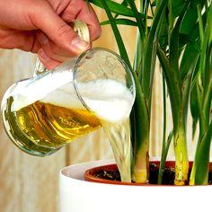 House Plants Decor, Plant Decor, Succulent Gardening, Garden Plants, Outdoor Garden Decor, Outdoor Gardens, Growing Plants, Growing Vegetables, Gravel Garden