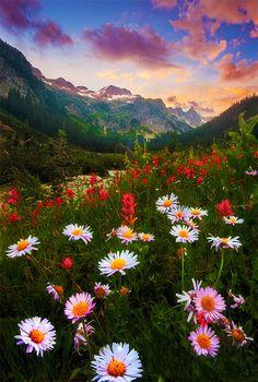 Washington USA flowers mountain clouds grass forest landscape