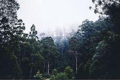 Reposting @crystal.richardson: Happy Friday! I need a tree adventure asap  #TGIF #tree #australia #melbourne #bawbaw #mountains #forest #longexposure #landscape #photography #moodygrams #sombrescapes #rsa_nature #rsa_mystery #australiafolk #canonaustralia #canon #tamron #explore #adventure #hiking #highcountry #travel #wanderlust #photooftheday #EarthFocus