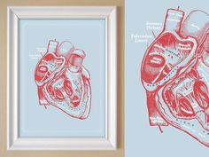Gray's Anatomy Heart Poster Powder Blue Red Heart by OmNomsStudio