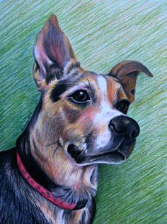 CUSTOM Colored Pencil Pet Portrait  One Subject  by anniedraper, $110.00