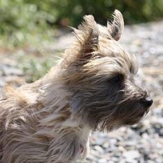 Mia Sophia adopted from Col. Potter Cairn Rescue. Vote for her at Hanging the Moon. https://www.facebook.com/HangingTheMoon