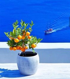 Always wanted a lemon tree in my garden.this looks so beautiful with the ocean in the background.I will only use a better looking pot. Santorini Island, Santorini Greece, Mykonos, Beautiful Islands, Beautiful Places, Lime And Basil, Enjoying The Sun, Greece Travel, Greek Islands